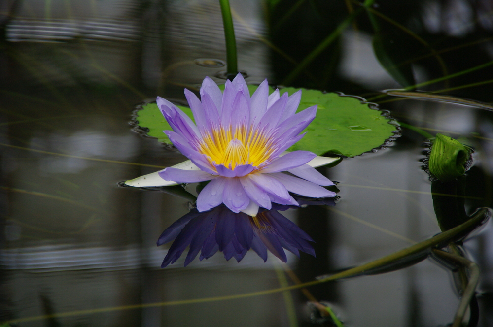 floating flower.jpg