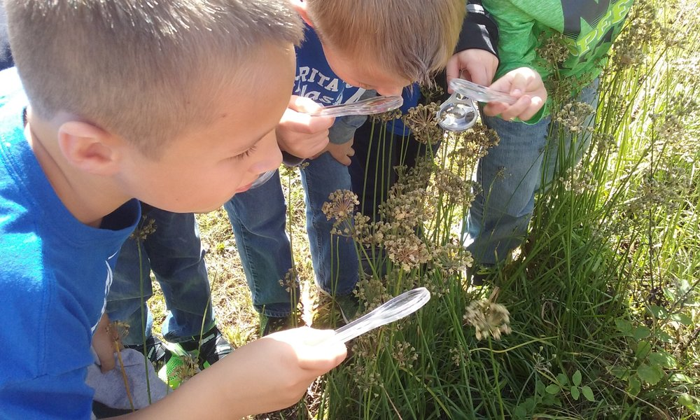 Checking out the seeds on the Canada Wild Onion.