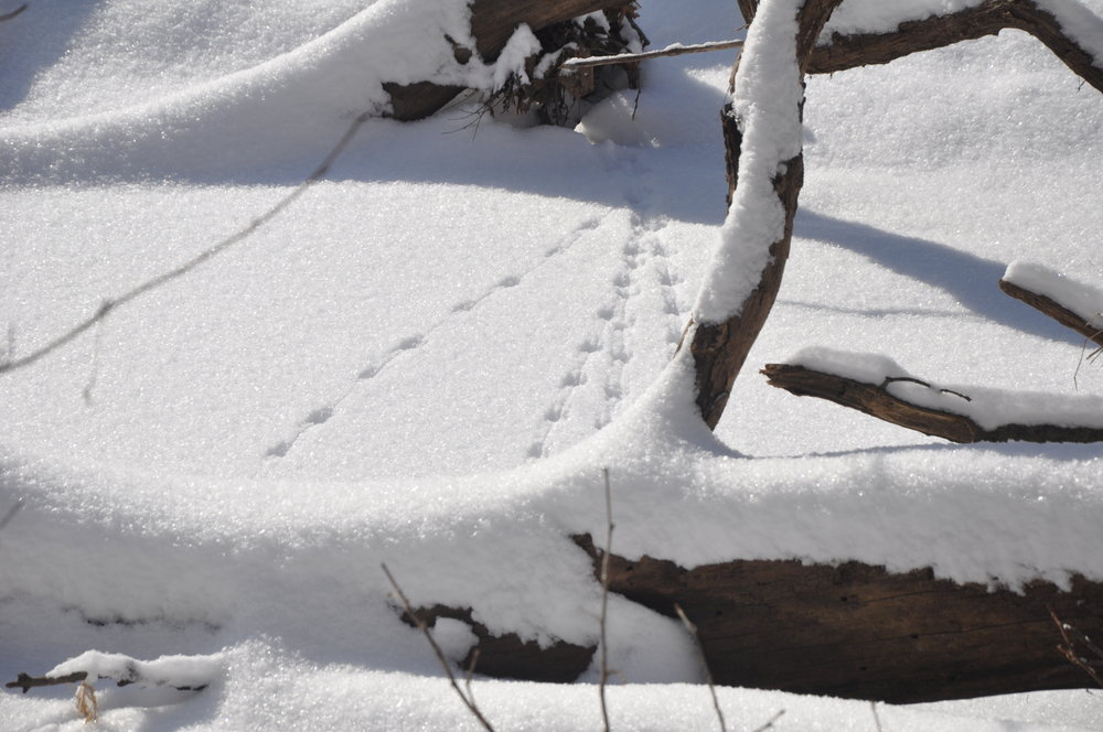 Mouse tracks on the frozen creek.