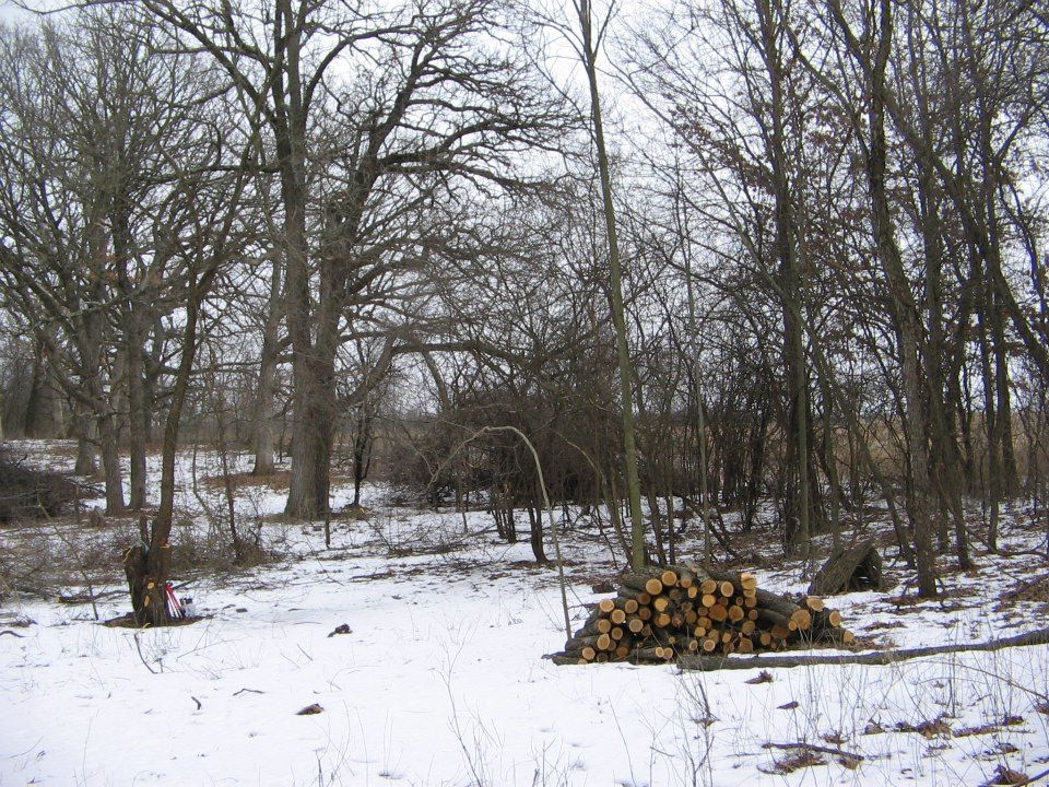 Snow disappears from around the base of trees by means of sublimation (direct transition to vapor).
