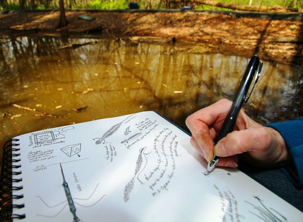 Nature Journaling.jpg