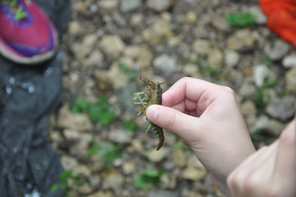 It was slim pickings, but we did find a crusty toe-grabber (crayfish).