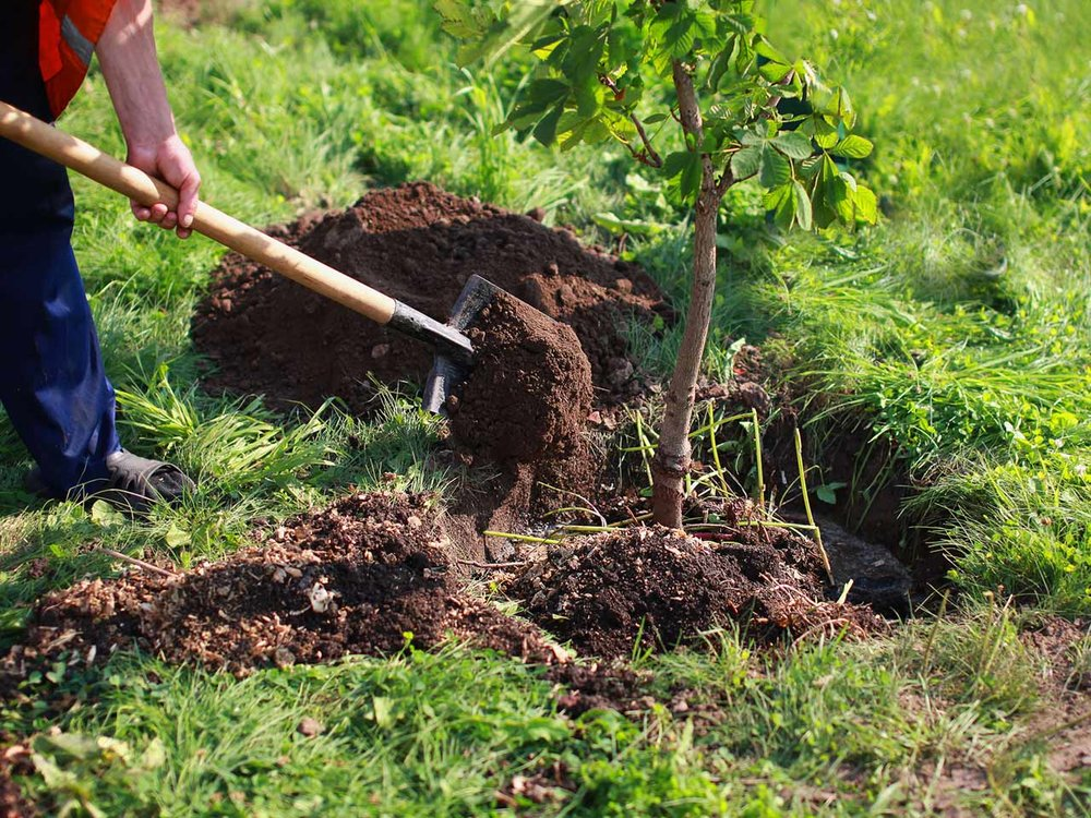 how-to-plant-a-tree-214337929-1280.jpg