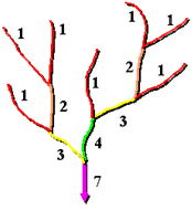 An illustration of the Shreve numbering system