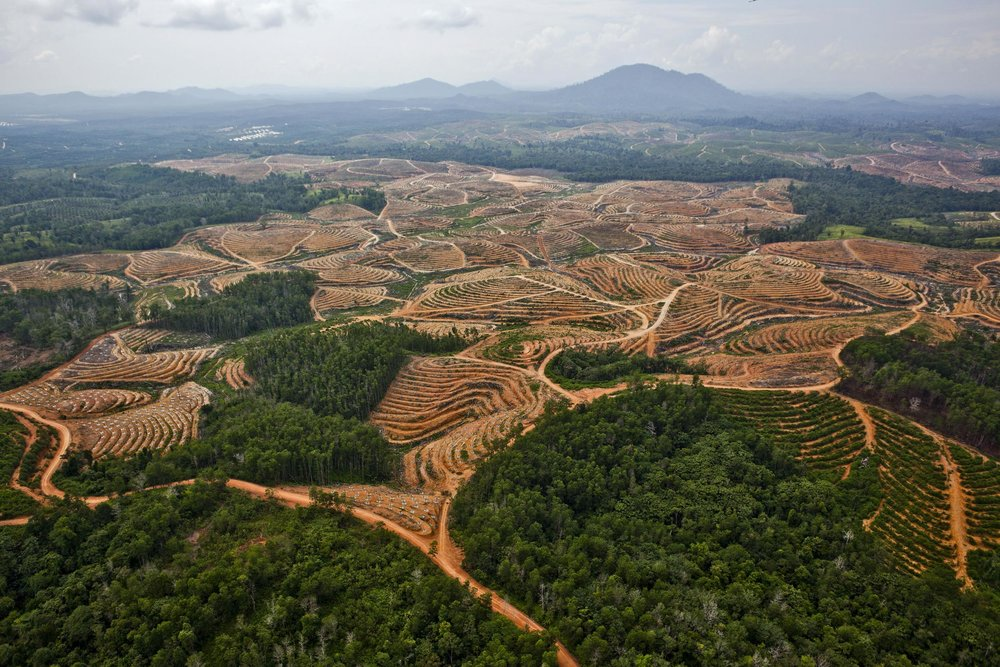 Deforestation for palm oil plantations.
