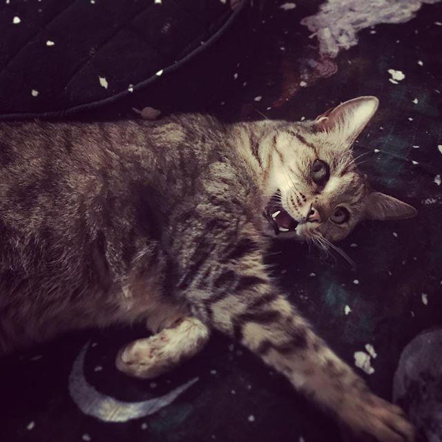 ✨ k i t t i e s • i n • s p a c e . 🚀 . . #kipandco #starrynight #spacekitty #catsofinstagram #catsofinsta