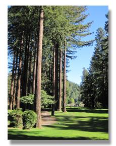activities_redwoods.jpg