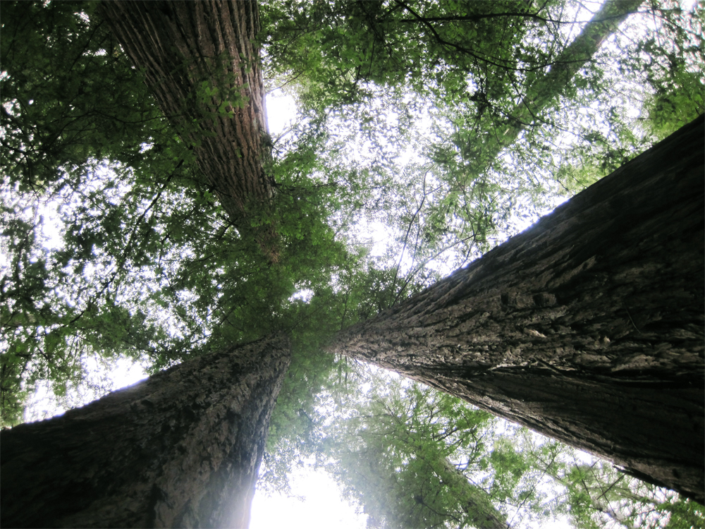 armstrong redwoods state park, guerneville