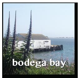 bodega bay town info