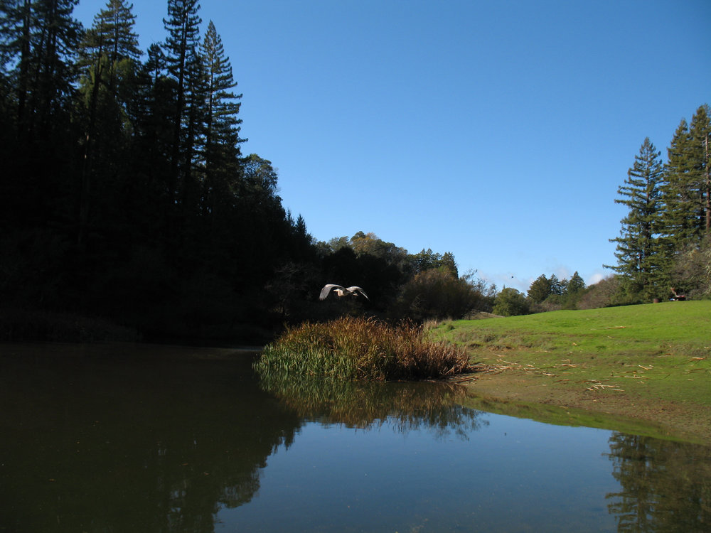 Bullfrong Pond at Austin State Recreation Area  , Guerneville