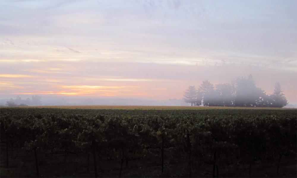 harvest dawn
