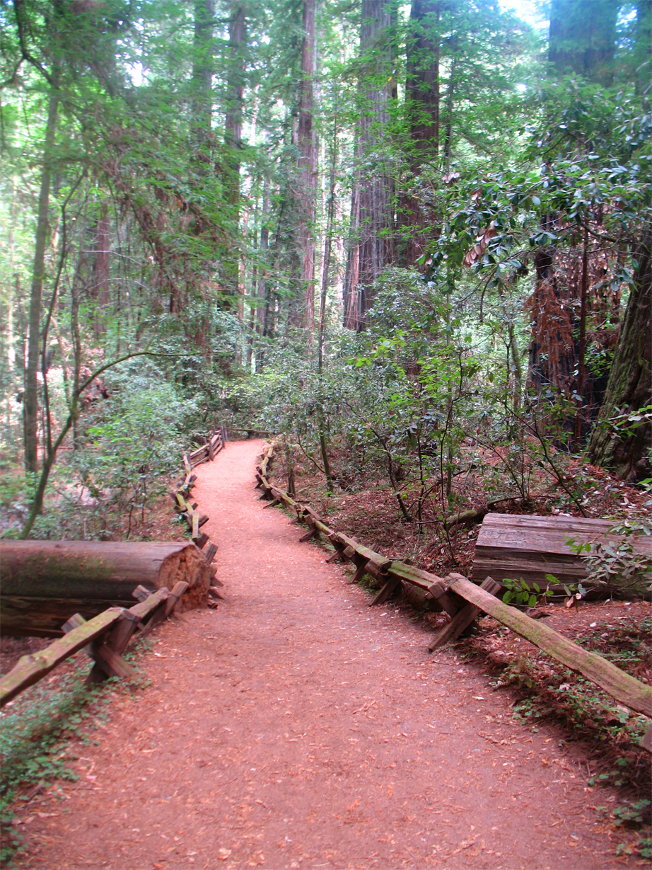 armstrong woods, guerneville