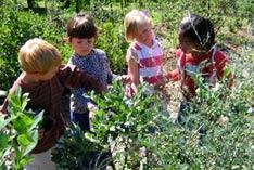 children-pickfruit.jpg