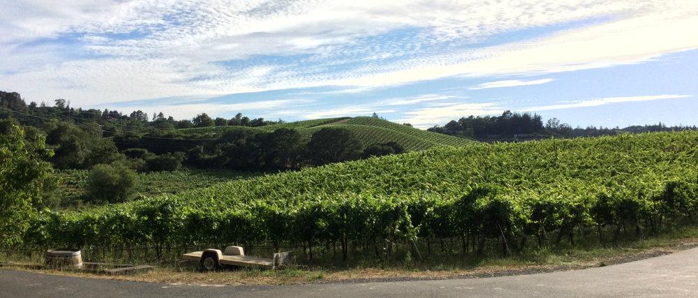 joseph swan vineyards