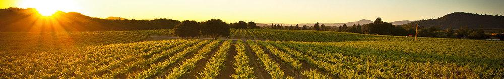 foppiano vineyards