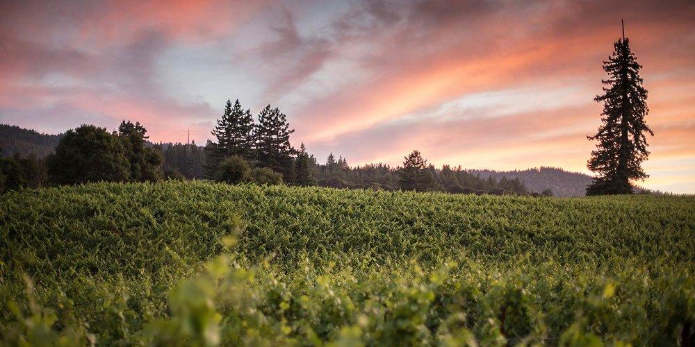 twomey vineyards