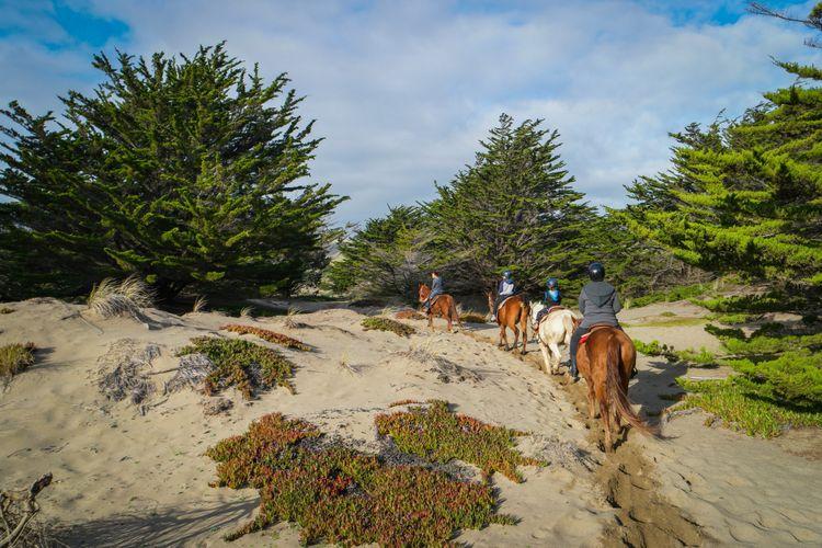 horse 'n around dune trail