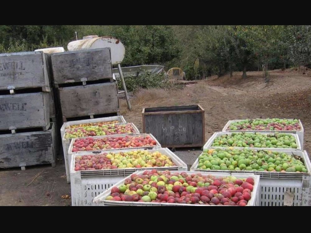 walker apples