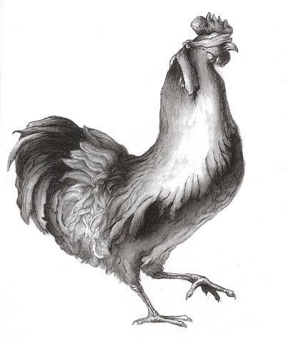 blindfold-rooster.jpg