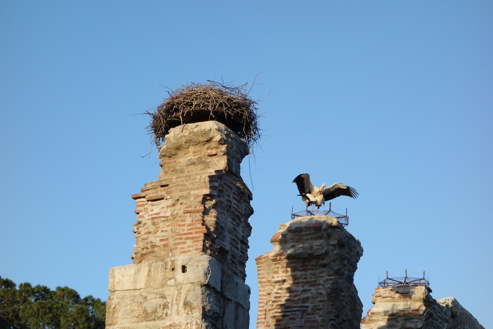 Storks possibly mating, prompting questions of who would deliver their baby.