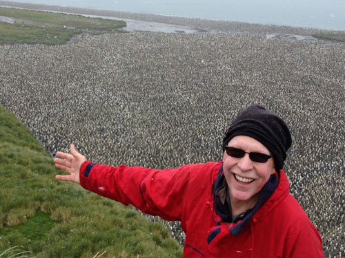 A sea of 200,000 King Penguins