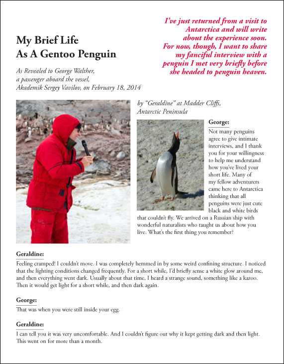 """My Brief Life As A Gentoo Penguin"", March 3, 2014"