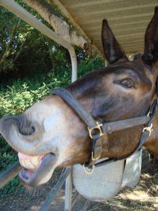 General Tobe the Mule