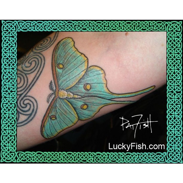 Luna Moth Tattoo by Pat Fish