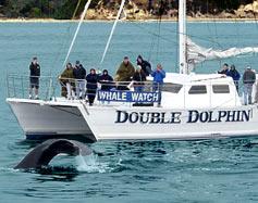 DoubleDolphin.jpg
