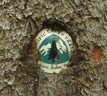 A tree growing around a PCT sign.