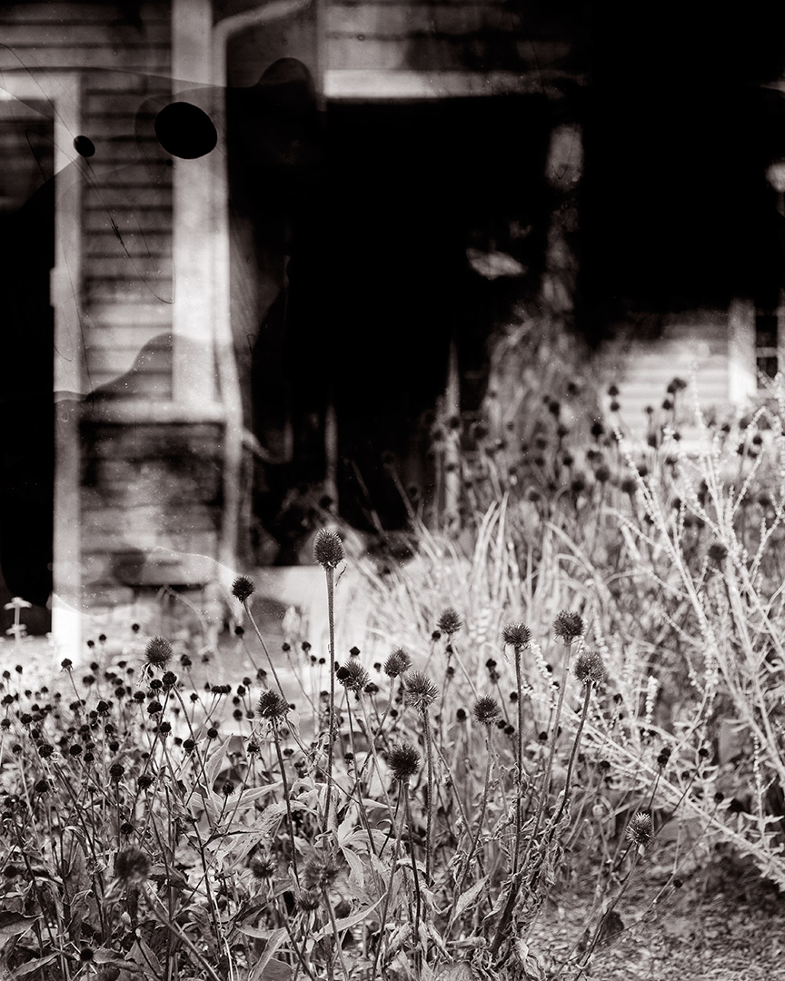 Untitled (black-eyed susans)