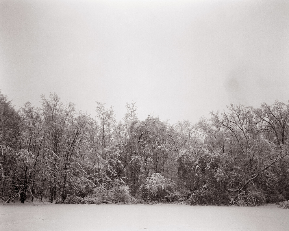 Untitled (Reeds Lake)