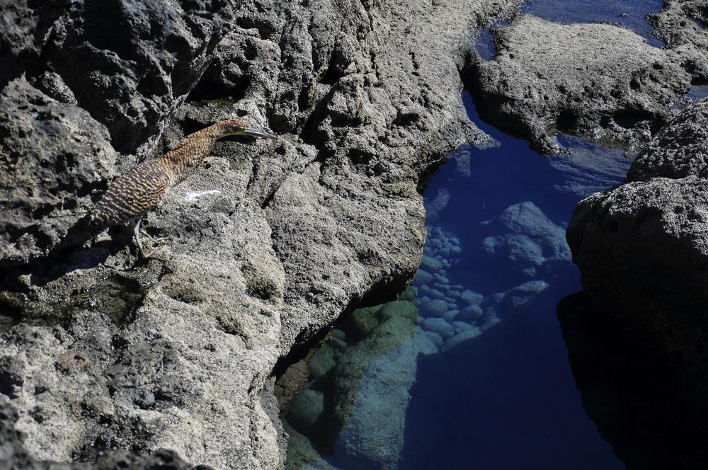 Tide Pool - Playa Montezuma