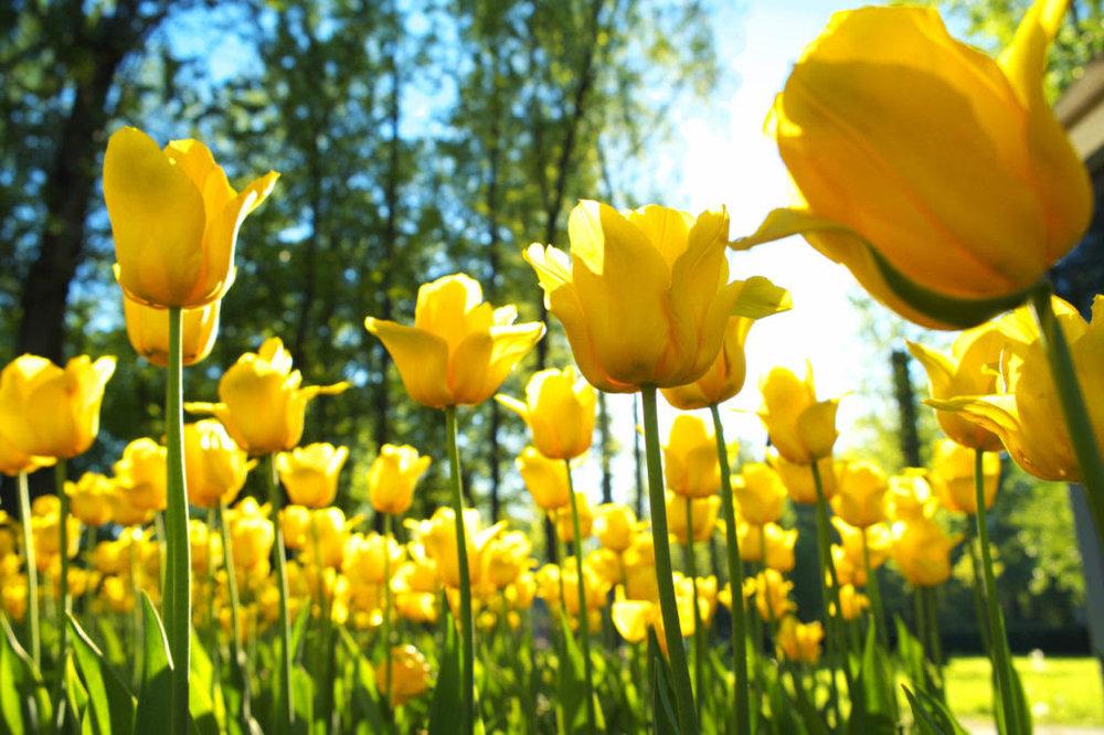 spring day.jpg