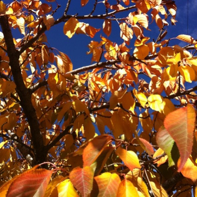Autumn Moments are so amazing in the garden #autumngarden #gardenfun #gardenlovers #gardencolours