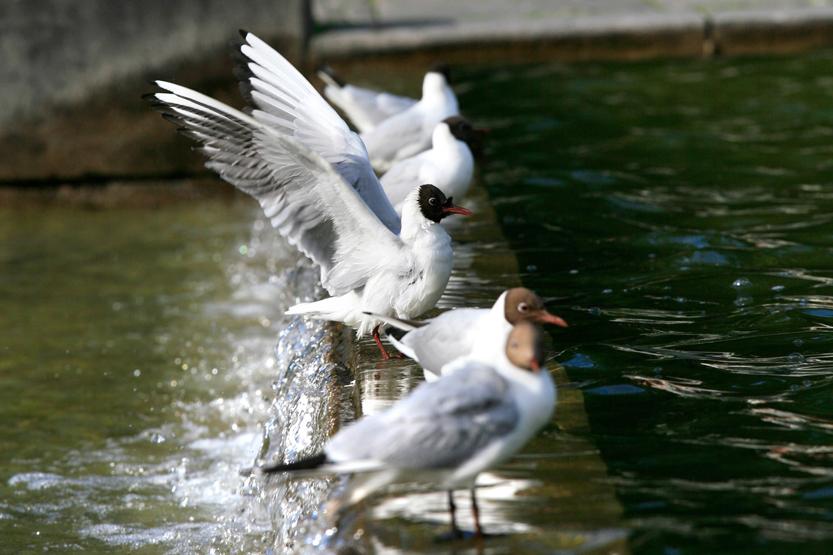 Sur les étangs et fontaines de Karl Johans Gate