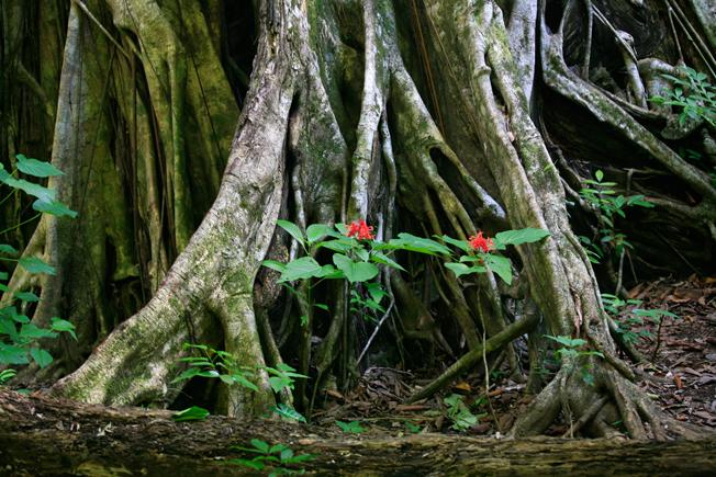 Le Parc National de Tangkoko