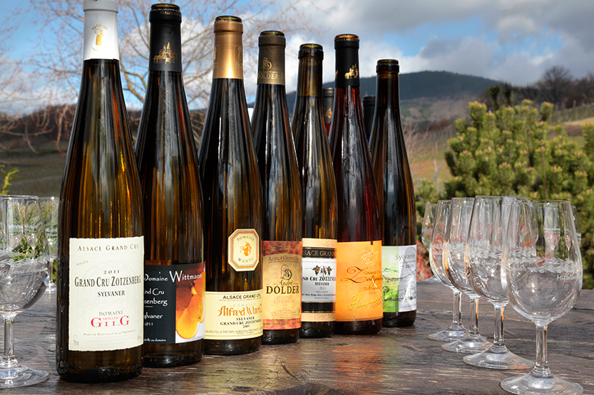 Picnic des les vignes avec les vignerons de Mittelbergheim