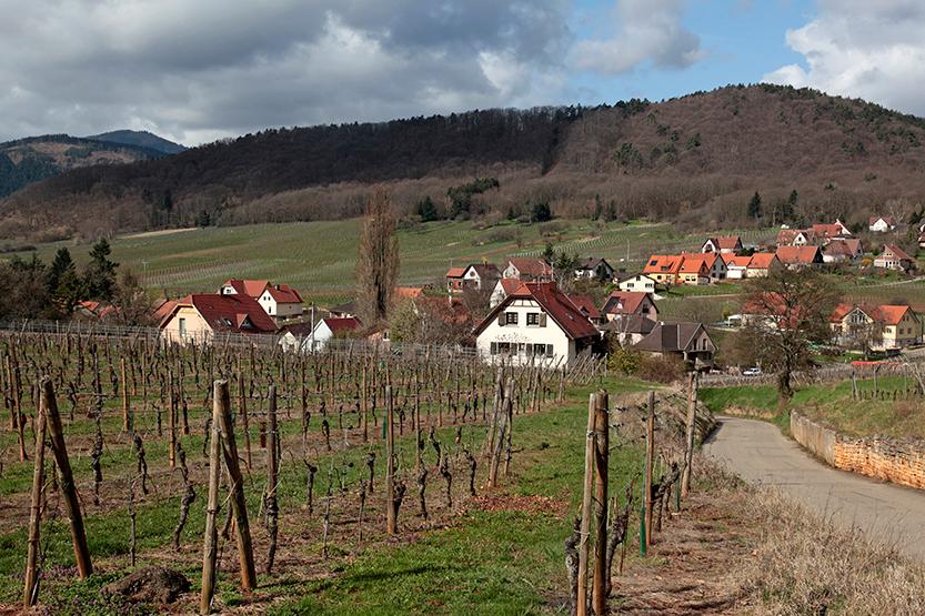 Coteaux de Mittelbergheim