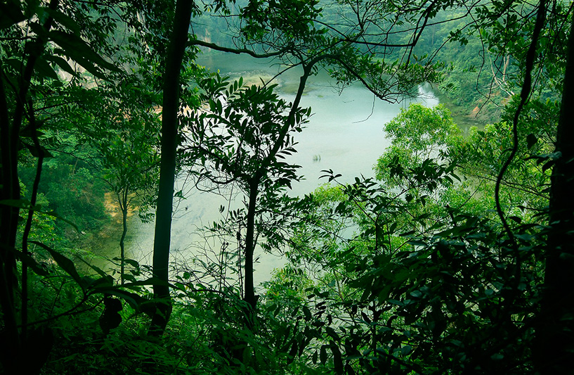 Bukit Timah Nature Reserves - Courtesy of Singapore Tourism Board