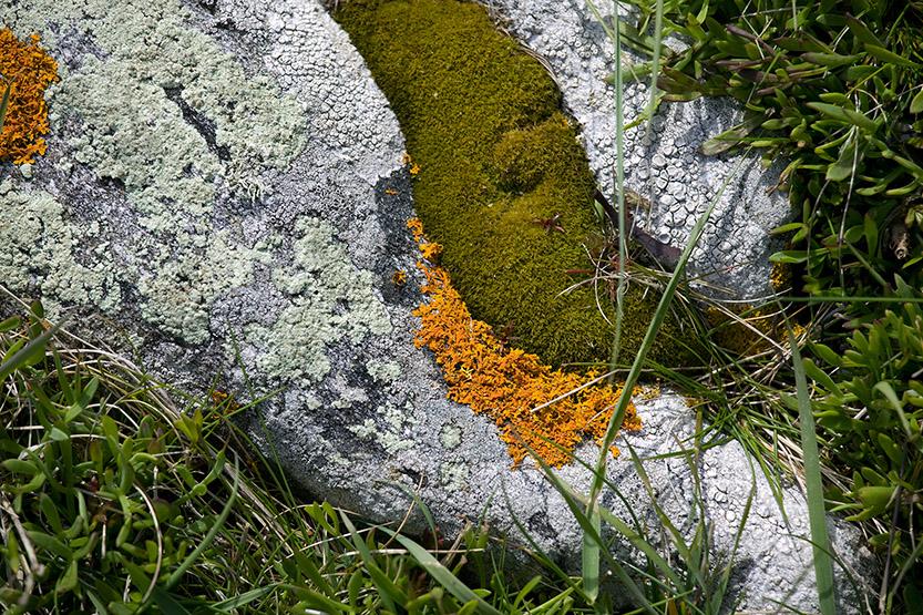 Poésie des lichens à Korejou © SD
