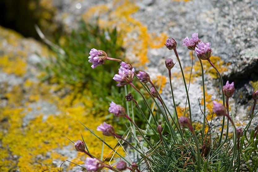 Poésie des lichens de Guissény © SD