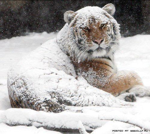 © Courtoisie d'un Photographe russe... Image postée sur ellf.ru