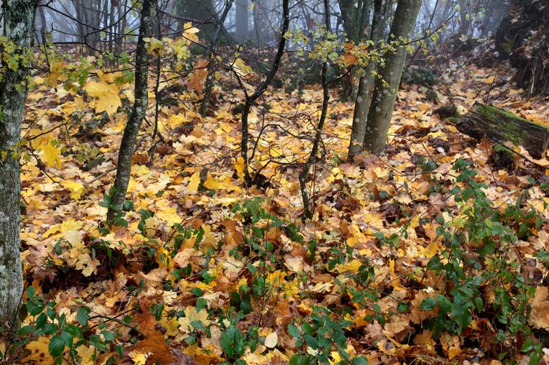 Forêts autour du village perché de La Petite Pierre
