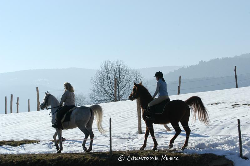 Randonnées équestres dans les Vosges alsaciennes