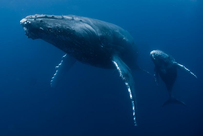 baleine2 - copie.jpg