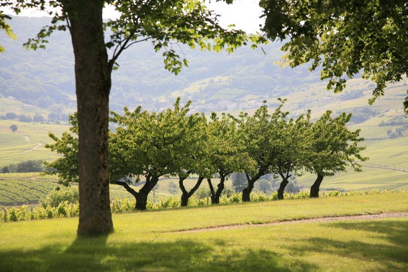 Des vignes et des courbes romantiques