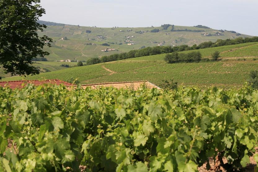 La poésie des paysages du Beaujolais