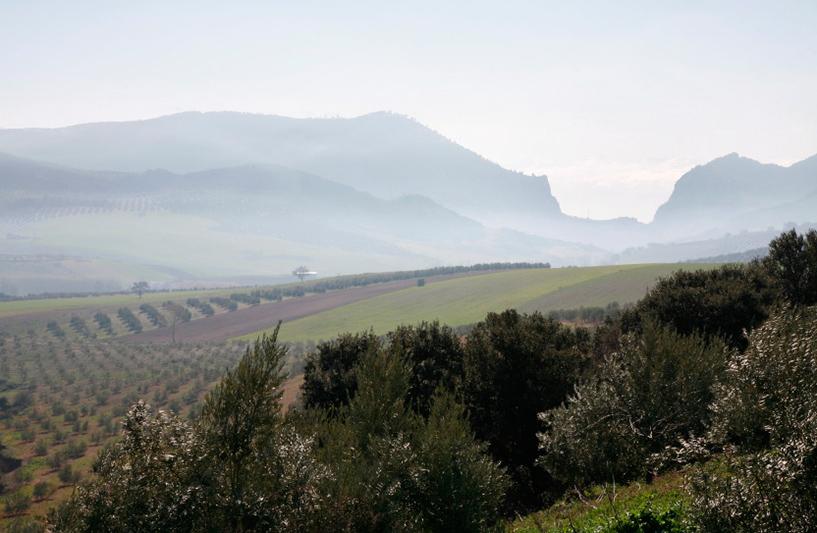 Un océan d'oliviers sur la route d'Alcala-la-Real