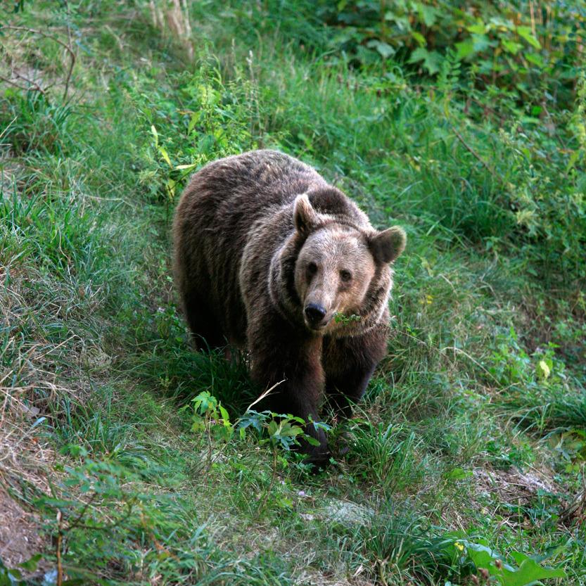 Au zoo de Pietra Nemt (Moldavie)